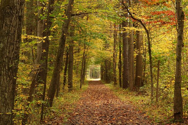 Bushkill Pennsylvania © Nicholas A. Tonelli