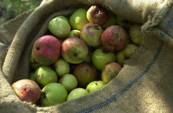 Cider Apples | © Alberto Elosegi/WikiCommons