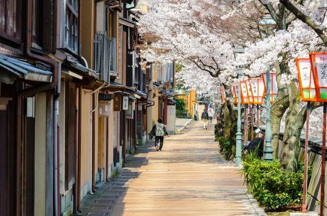Вишневые цветы, выложенные на улицах Канадзавы |  © Lifebrary / Shutterstock