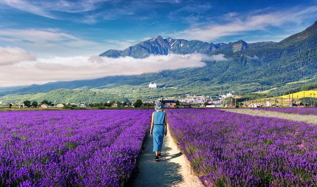 Цветы цветут в Фурано |  © Kanuman / Shutterstock