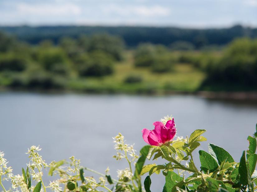 Nemunas River near Vilkija |©Šarūnas Burdulis/Wikimedia Commons
