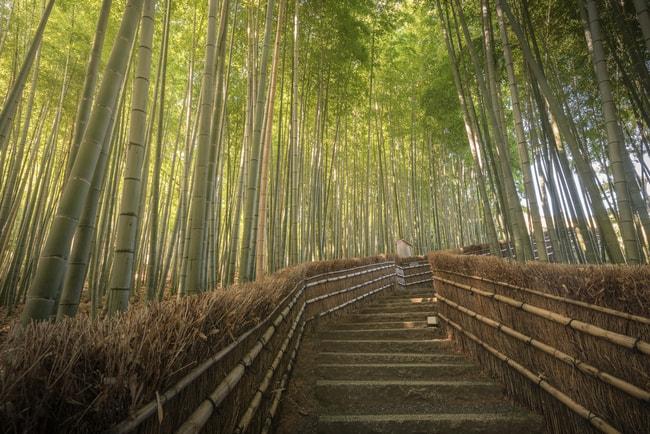 Сагано Бамбуковый лес в Арашияме  loverme