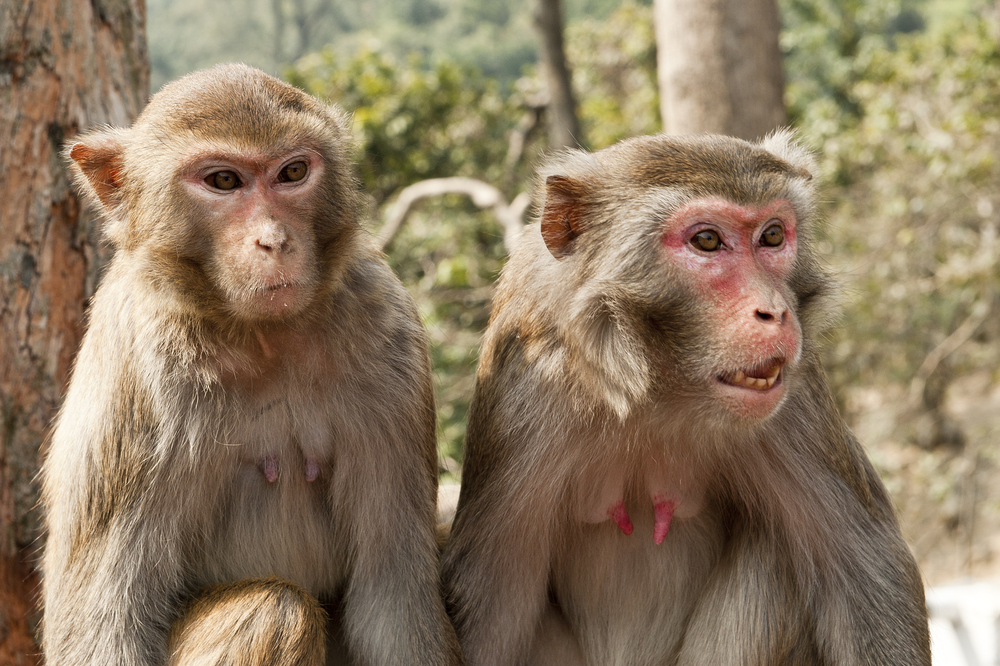 Two wild monkeys | © Yevgen Sundikov/Shutterstock