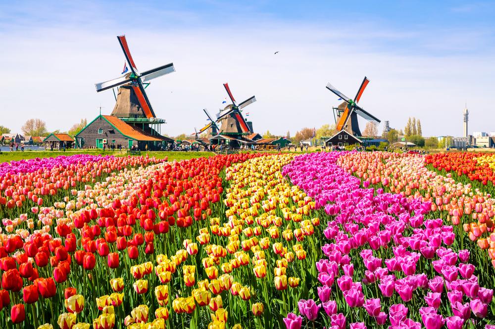 Tulip Festival |© Olena Z/Shutterstock