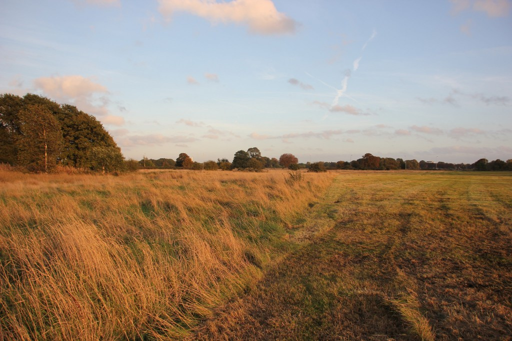 Wanstead Flats ©Matthew Black