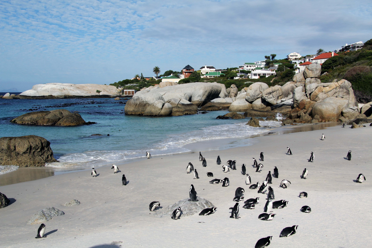 The Best Beaches In Cape Town South Africa