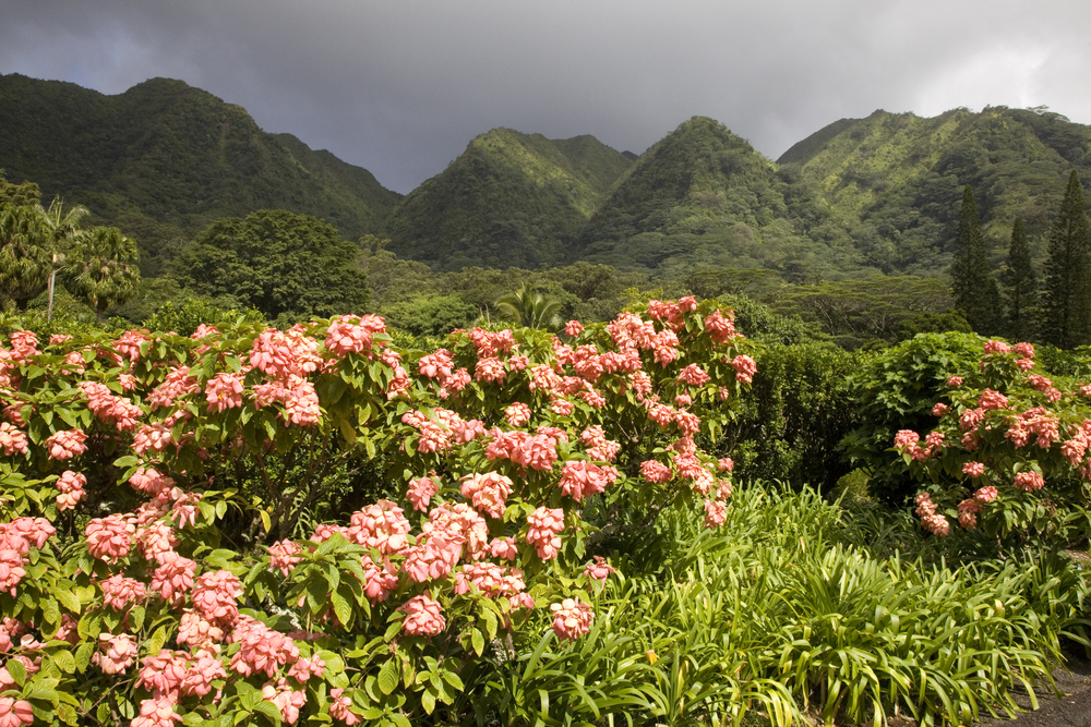 The Harold L Lyon Arboretum botanical gardens inland of Honolulu, Hawaii © Lisa Strachan / Shutterstock