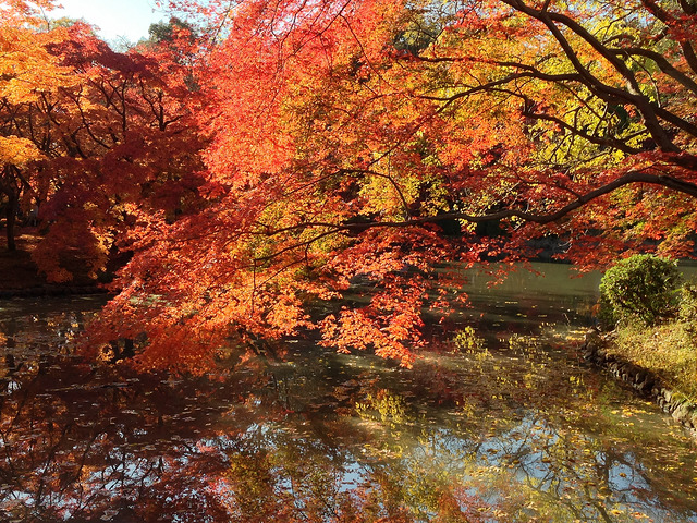 Kyoto Botanic Garden  © kimubert/Flickr