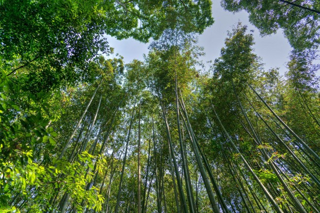 Kyoto Bamboo |© Pixabay
