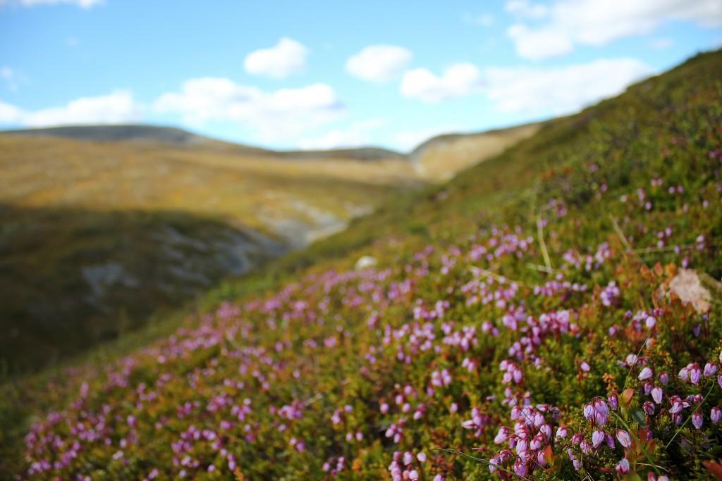Pallas-Yllästunturi National Park | © Crowbared/Shutterstock