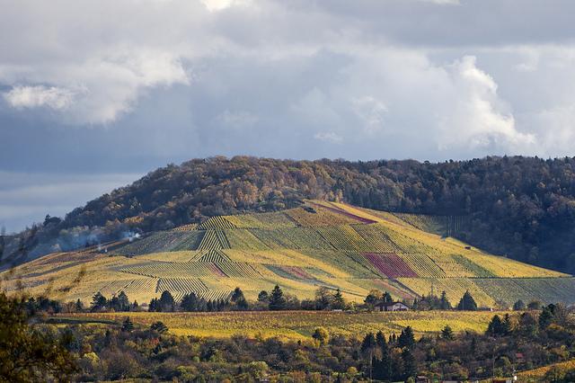 The hills in Stuttgart seen from the zoo | ©Tambako The Jaguar/ Flickr