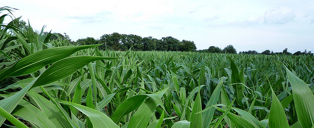 "Field | © Jessica ""The Hun"" Reeder/Flickr"
