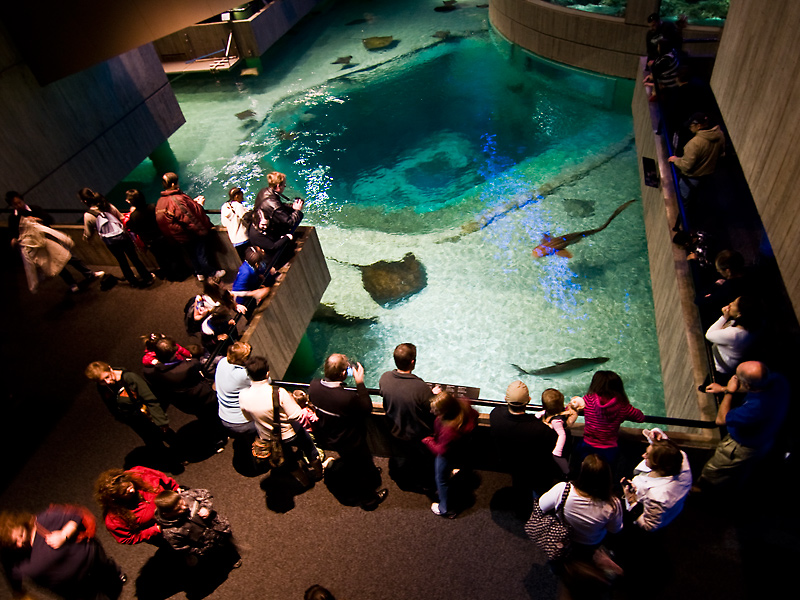 Interactive tank at National Aquarium in Baltimore © Sean Naber/Flickr