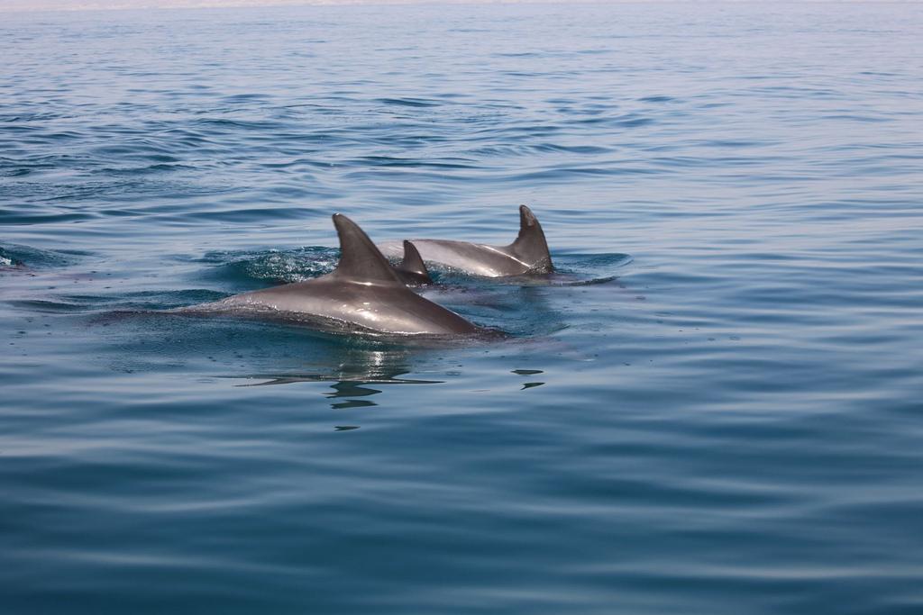 Dolphins / © ninara/Flicker