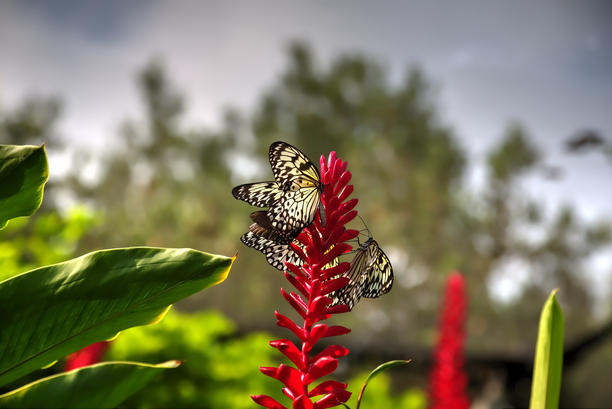 Butterfly Farm | ©Steve Sutherland/Flickr