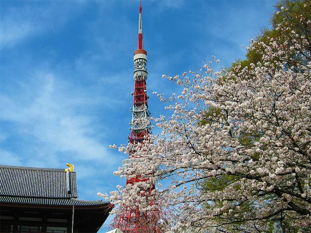 Cherry Blossoms and Tokyo Tower|©Hiroaki Kaneko/Flickr