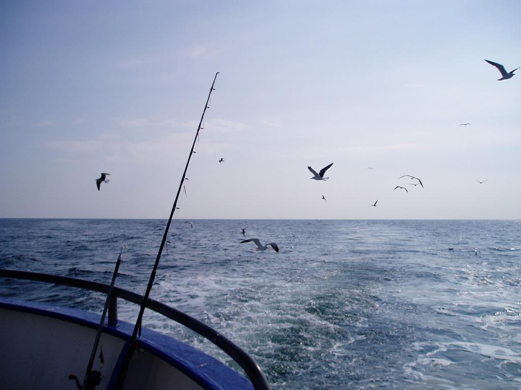 Deep Sea Fishing | ©Mats Hagwell/Flickr