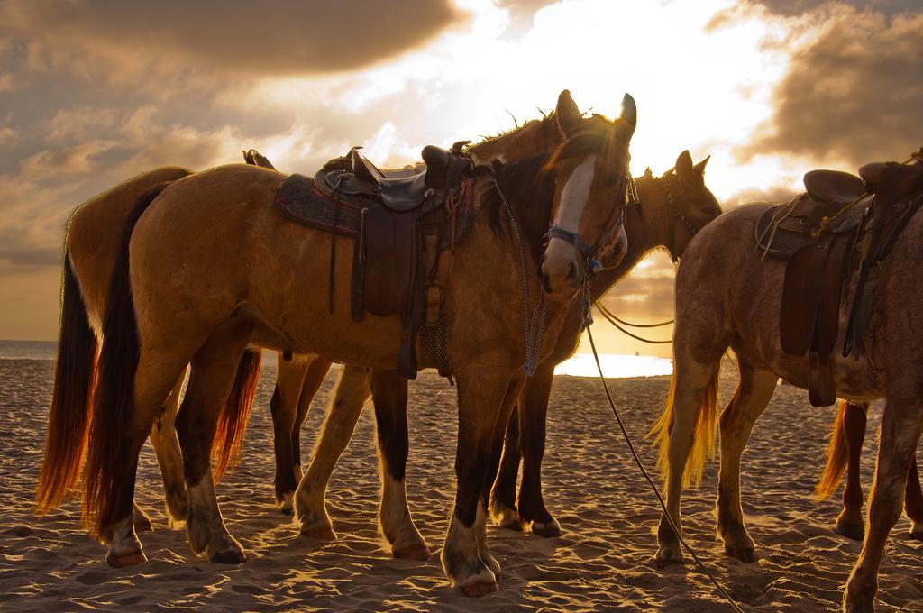 Horsing around on Rosarito Beach | ©John Liu/Flickr
