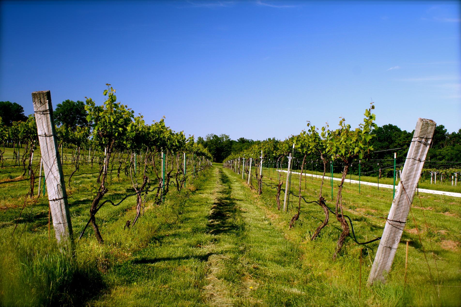 Robller Vineyard | Courtesy of Robller Vineyards & Winery