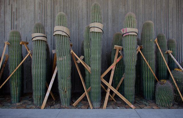 Cacti Installation at Scottsdale Museum of the West | ©vistavision/Flickr
