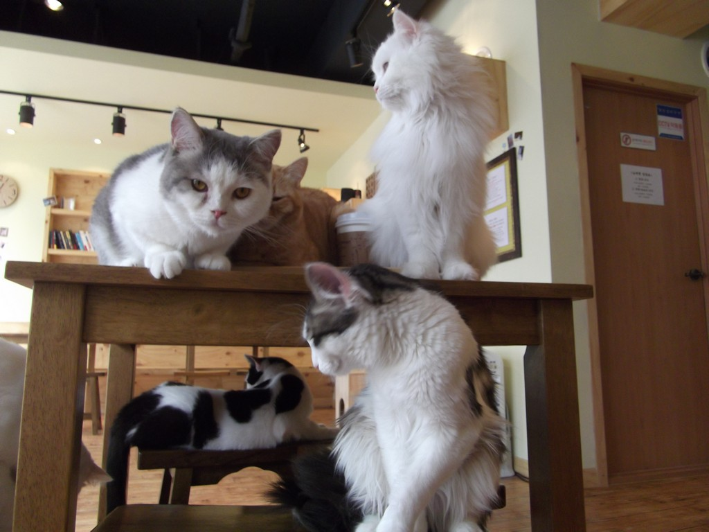 Cats in a café/©Mouselinguist/wikicommons