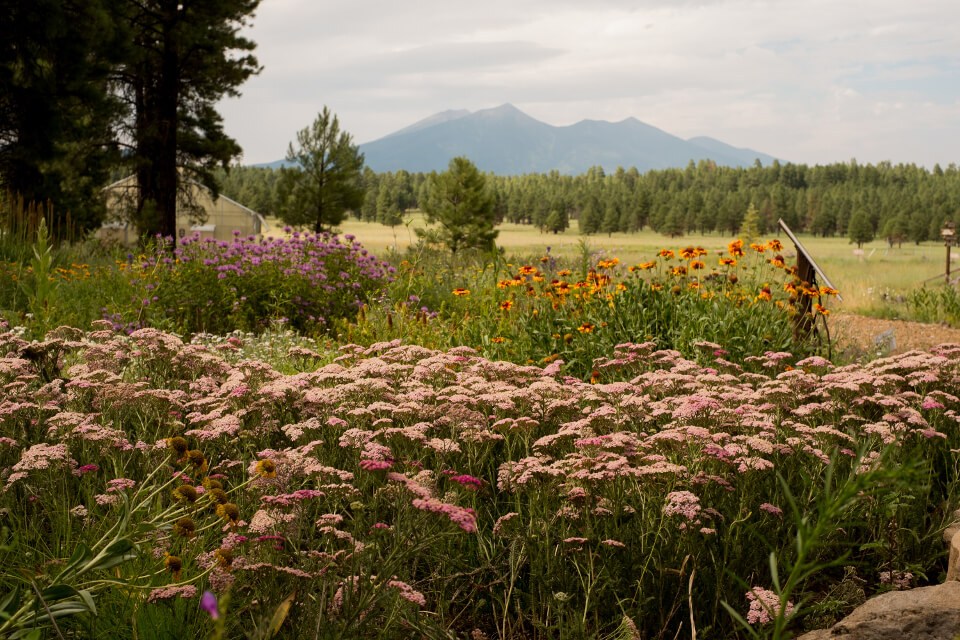 Courtesy of The Arboretum at Flagstaff