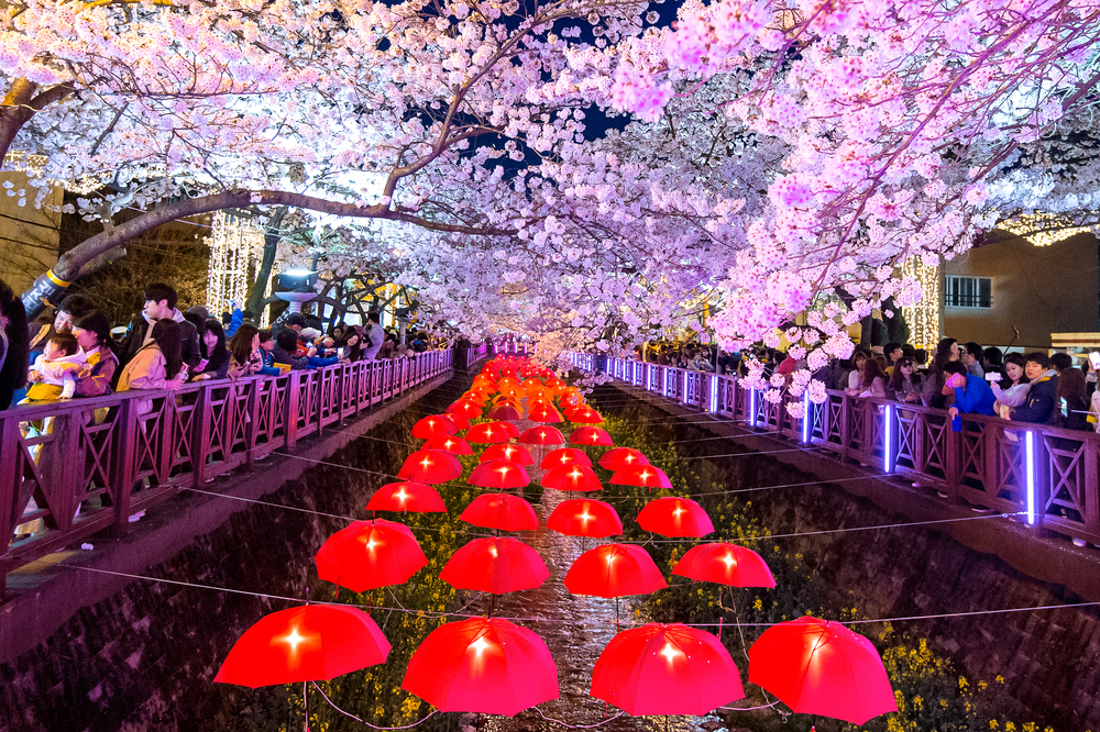 Towns in South Korea, Jinhae South Korea is most famous in the spring for its incredible Cherry Blossoms © Guitar photographer / Shutterstock.com