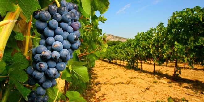 Vines | © Byothe