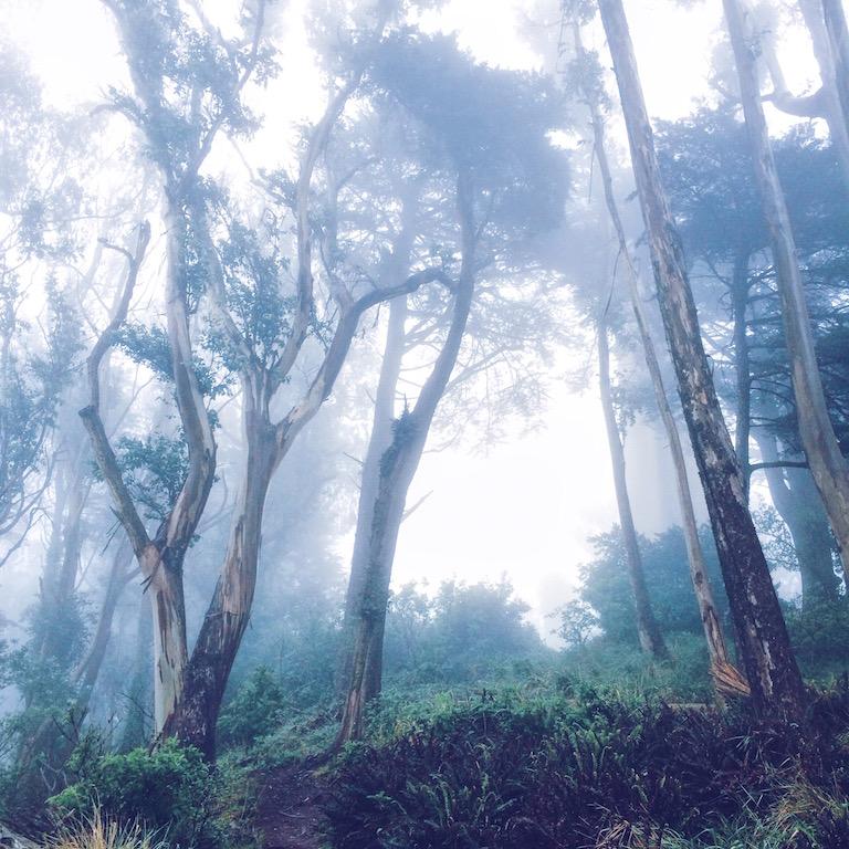 Mount Davidson on a Foggy Morning © Sasha Zvereva