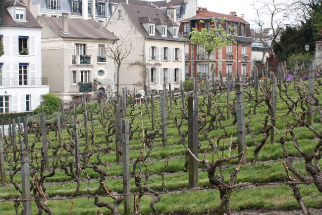 Vineyard, Montmartre |© Tanya Hart/Flickr