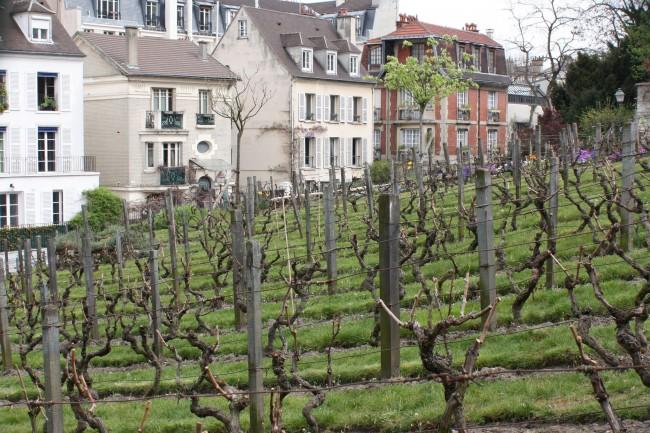Vineyard, Montmartre |© Tanya Hart/Flickr