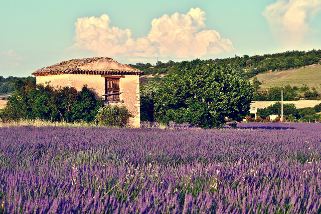 Provence © François Philipp/Flickr