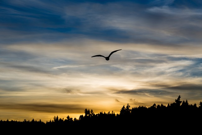 Silverdale Sunset Silhouette | © Jonathan Miske/Flickr