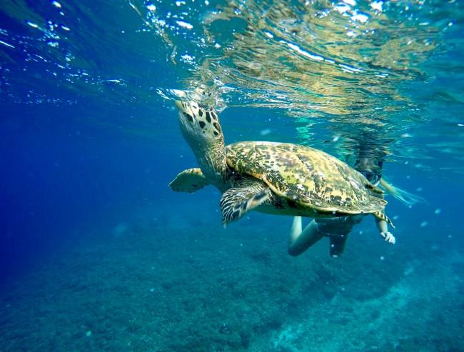 Sea turtle breath underwater | © dronepicr/Flickr