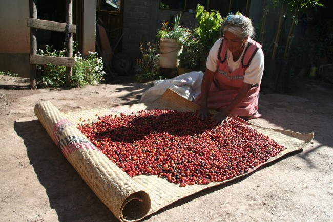 Drying coffee beans © Angela Sevin/Flickr