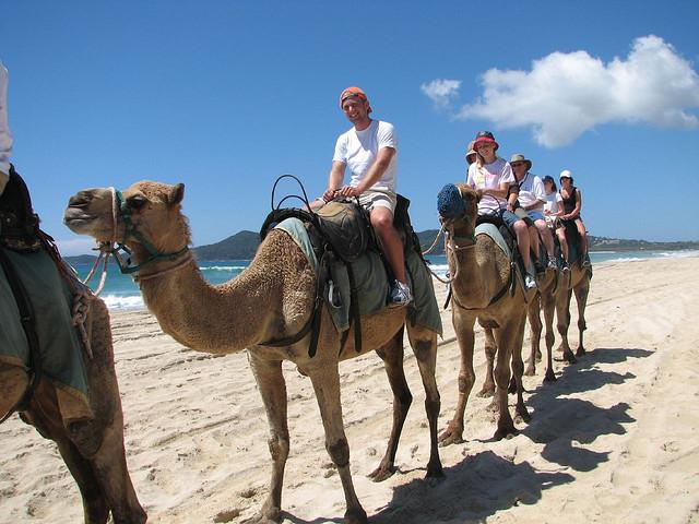 Camel rides in Australia © Corey Butler/Flickr