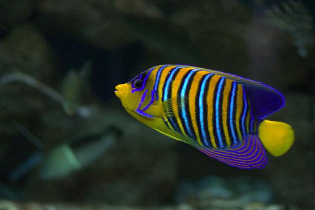 Hurghada Grand Aquarium | © Olga/ Олька/Flickr