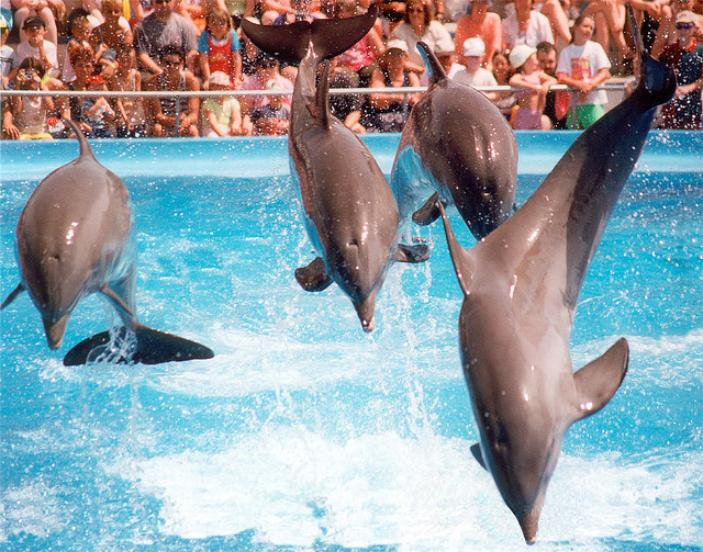 Dolphinarium © David Blaikie|Flickr