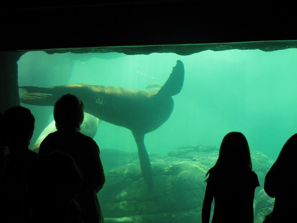 Indianapolis Zoo © Jeremy Thompson
