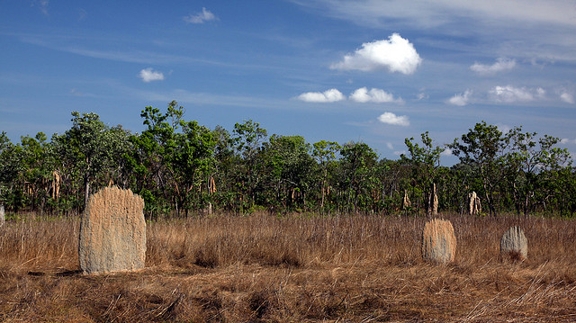 Magnetic termite mounds I © Dave Scriven/Flickr
