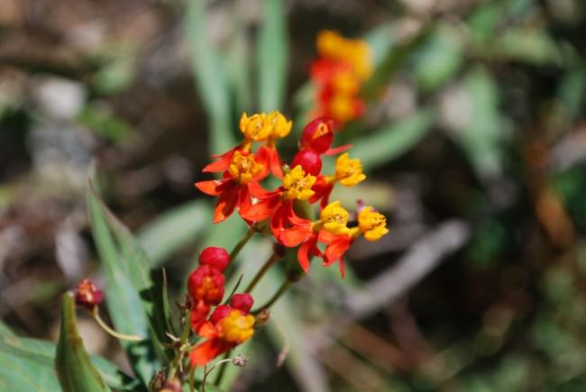 Botanical Gardens | © Laura Bittner/Flickr