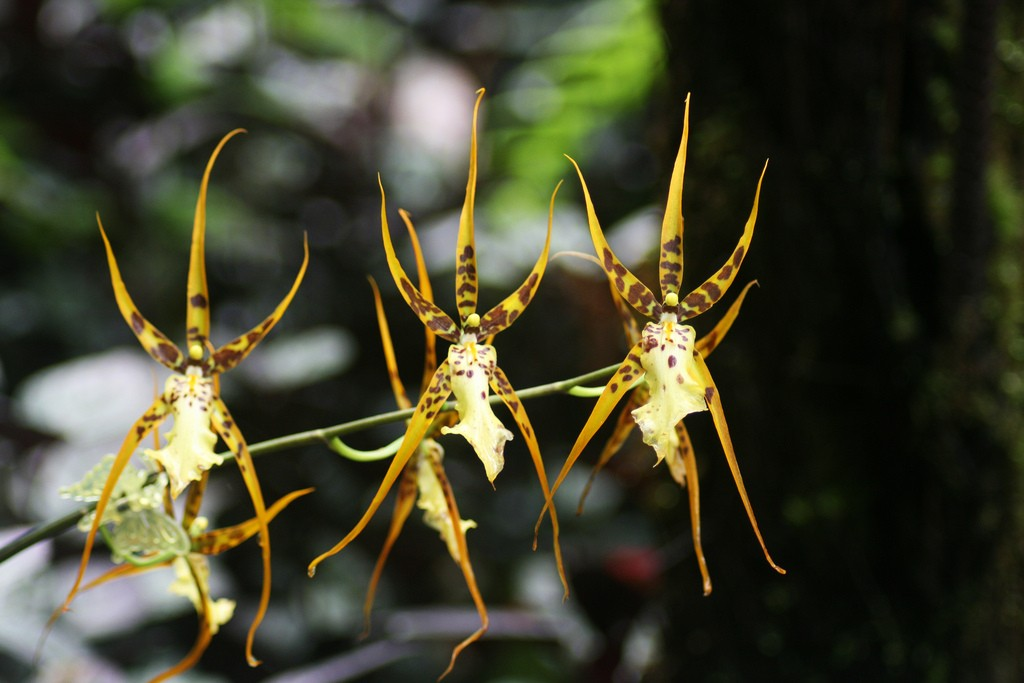 The Ragunan Orchid Garden in South Jakarta is an amazing botanic collection © Quinn Dombrowski / Flickr