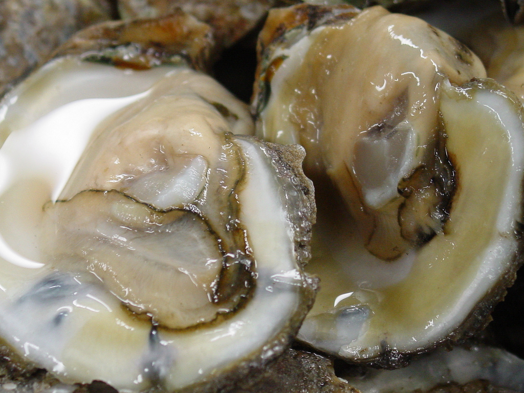 Freshly Shucked Oysters | © Larry Hoffman/Flickr