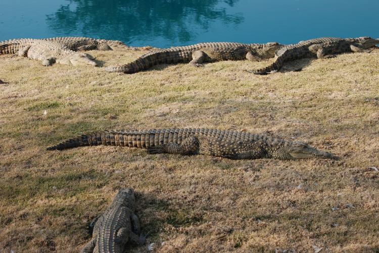 Croc City, Gauteng   © George Groutas/Flickr