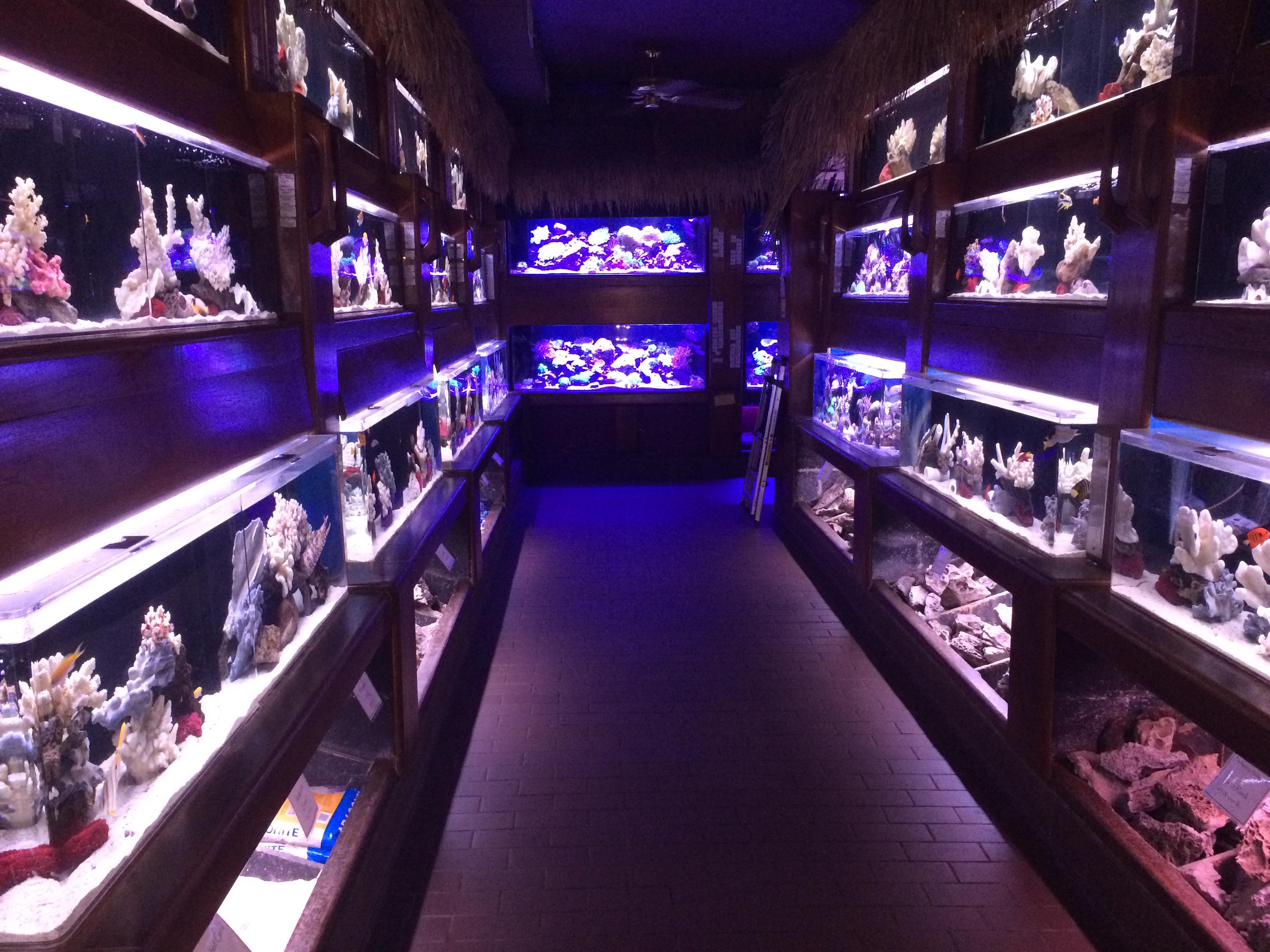 Inside of Old Town Aquarium   © Benita Gingerella