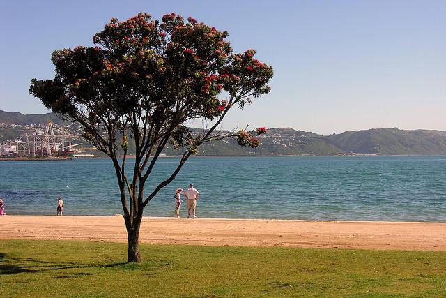 Elements of the New Zealand summer archetype, Oriental Bay | © Phillip Capper/flickr