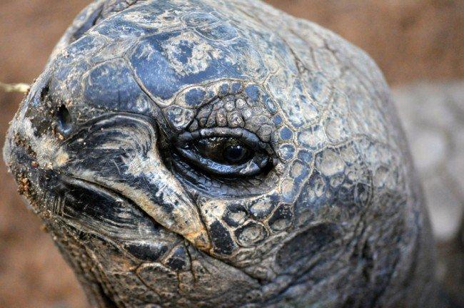 Giant tortoise © Madeleine Deaton/Flickr