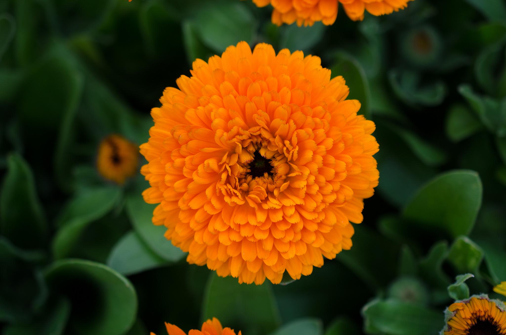 Flower © Armando Argandar/Flickr
