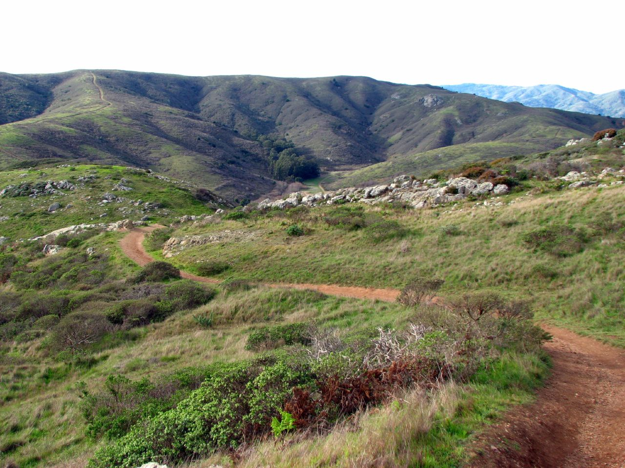 The Old Spring Trail in Marin Headlands   © David Berry_Flickr