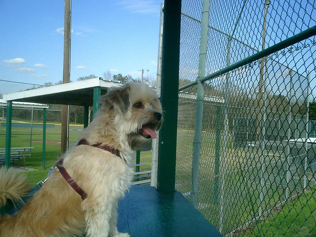 Dog at Bear Creek Dog Park | ©Chris Doelle/Flickr